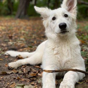 Schulhund Aria