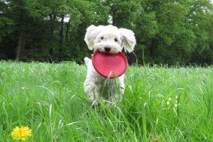 Schulhund Emma
