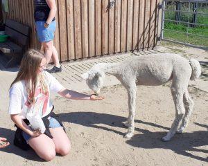 Tiergestützte Pädagogik mit Alpakas